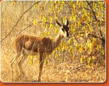 bandhavgarh wildlife safaris